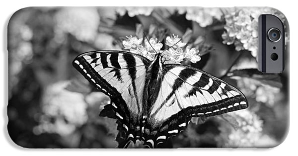 Monotone iPhone Cases - Tiger Swallowtail Butterfly Black and White iPhone Case by Jennie Marie Schell