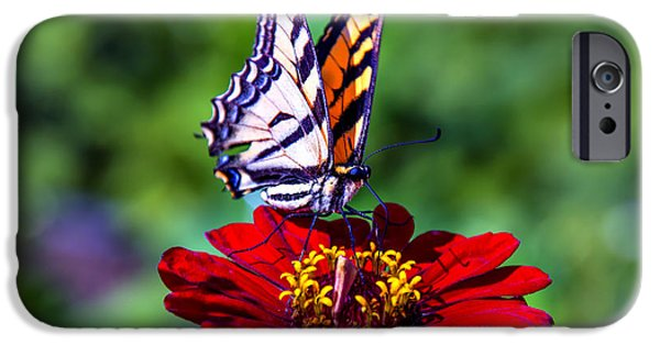 Antennae iPhone Cases - Tiger Tail On Red Flower iPhone Case by Garry Gay