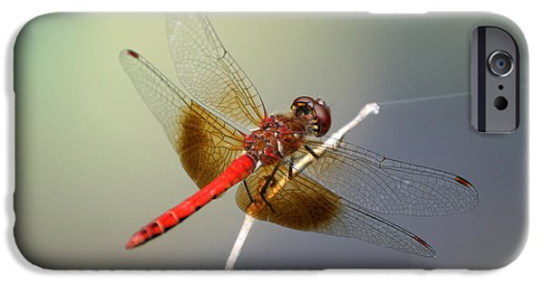 Insects iPhone Cases - Tight Rope Walking  iPhone Case by Neal  Eslinger