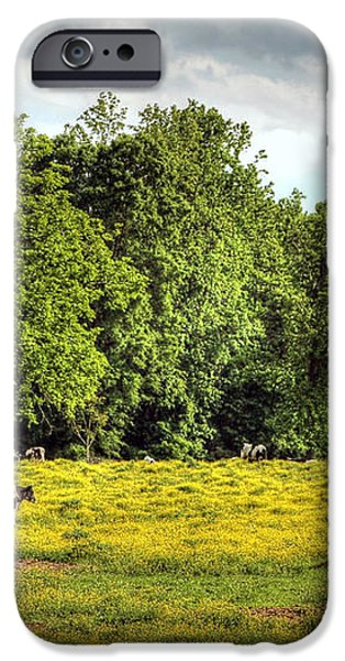 Till the Cows Come Home iPhone Case by Benanne Stiens