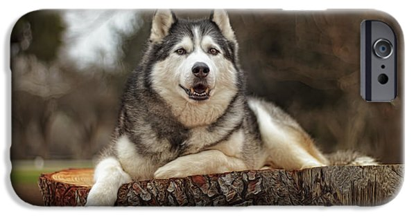Recently Sold -  - Husky iPhone Cases - Timber iPhone Case by Brian Cross