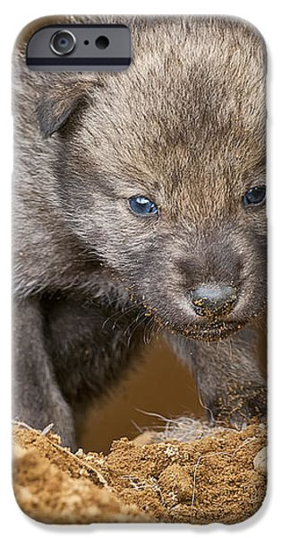 Timber Wolf Pictures 782 iPhone Case by World Wildlife Photography