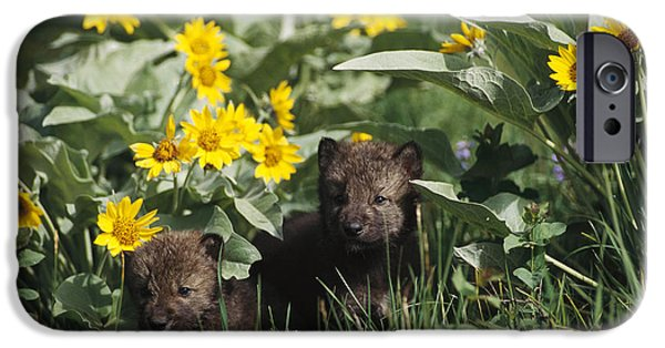 Wolf Photographs iPhone Cases - Timber Wolf Pups And Flowers North iPhone Case by Gerry Ellis