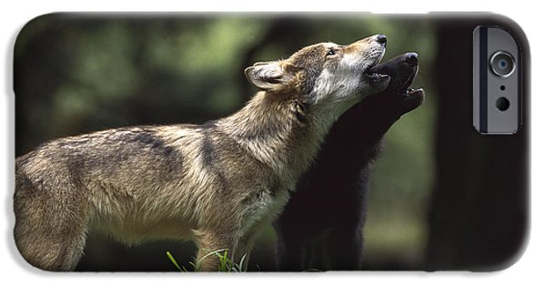 Wolf Photographs iPhone Cases - Timber Wolf Pups Howling iPhone Case by Gerry Ellis