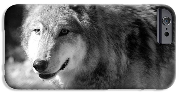 Wolf Photo iPhone Cases - Timber Wolf iPhone Case by Stephanie McDowell