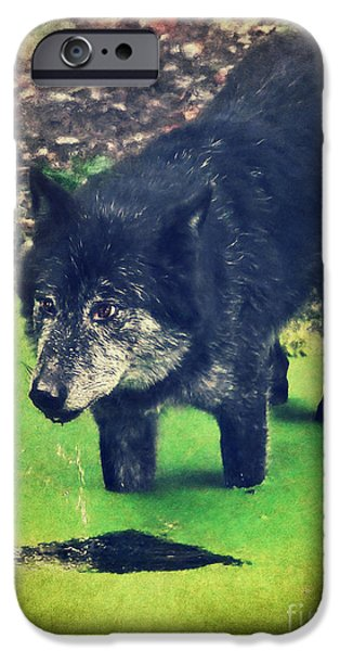 Wolf Pictures iPhone Cases - Timberwolf iPhone Case by Angela Doelling AD DESIGN Photo and PhotoArt