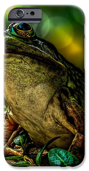 Time Spent With The Frog iPhone Case by Bob Orsillo