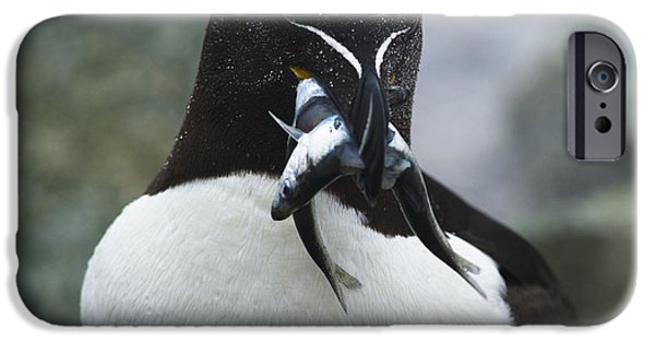 Razorbill iPhone Cases - Time to feed the kids... iPhone Case by Nina Stavlund