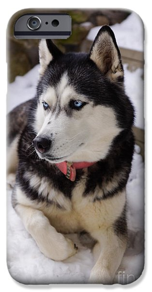 Huskies iPhone Cases - Time to Rest iPhone Case by Jennifer White