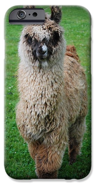 Llama Digital iPhone Cases - Timmy iPhone Case by Kathy Sampson