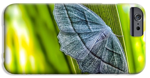 Corporate Art Photographs iPhone Cases - Tiny Moth On A Blade of Grass iPhone Case by Bob Orsillo