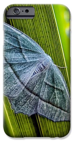 Corporate Photographs iPhone Cases - Tiny Moth On A Blade of Grass iPhone Case by Bob Orsillo