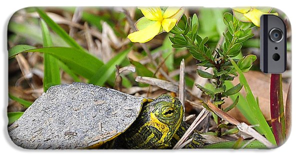 Slider Photographs iPhone Cases - Tiny Turtle Close Up iPhone Case by Al Powell Photography USA