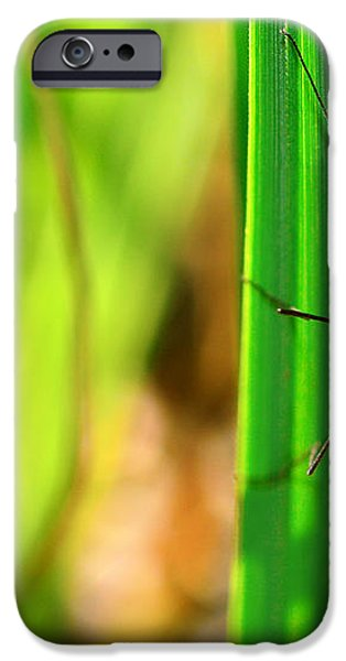 Tipula iPhone Case by Toppart Sweden