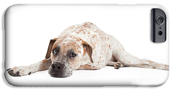 Sleepy iPhone Cases - Tired Pointer Crossbreed Laying iPhone Case by Susan  Schmitz