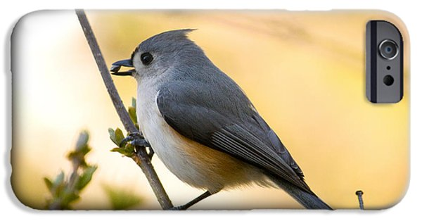 Titmouse iPhone Cases - Titmouse In Gold iPhone Case by Shane Holsclaw