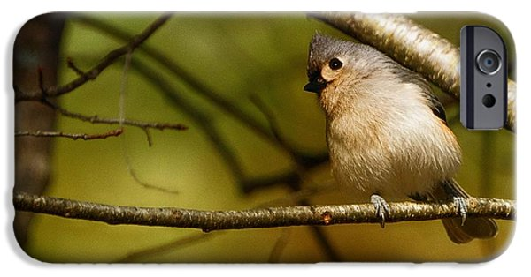 Gray Hair iPhone Cases - Titmouse iPhone Case by Richard Smith