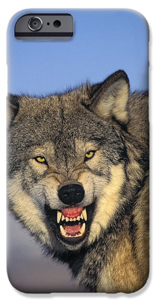 T.kitchin Wolf Snarling iPhone Case by First Light