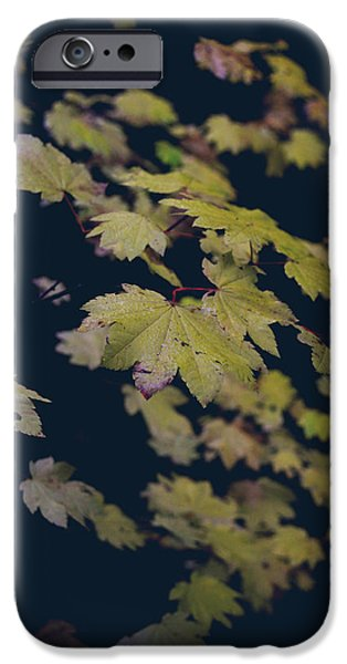 Yellow Leaves iPhone Cases - To Have You Near iPhone Case by Laurie Search
