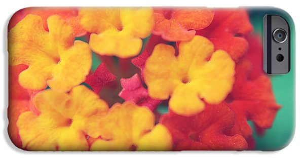 Macro Flower iPhone Cases - To Make You Happy iPhone Case by Laurie Search