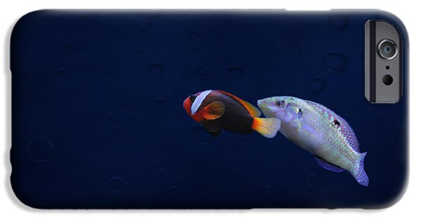 Clown Fish Photographs iPhone Cases - To the light iPhone Case by Heike Hultsch