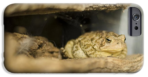 Amphibians Photographs iPhone Cases - Toad in the Hole iPhone Case by Heather Applegate