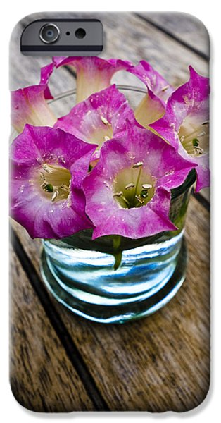 Garden Images iPhone Cases - Tobacco Flowers iPhone Case by Frank Tschakert