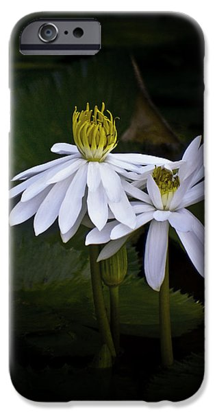 Botanical Photographs iPhone Cases - Togetherness iPhone Case by Holly Kempe