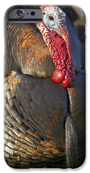 Best Sellers -  - Eastern Wild Turkey iPhone Cases - Tom iPhone Case by Jack Milchanowski