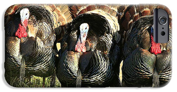 Eastern Wild Turkey iPhone Cases - Tom Tom and Tom iPhone Case by Randy Stephens