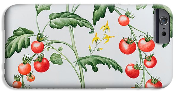 Fruit On The Vine Print iPhone Cases - Tomatoes iPhone Case by Sally Crosthwaite