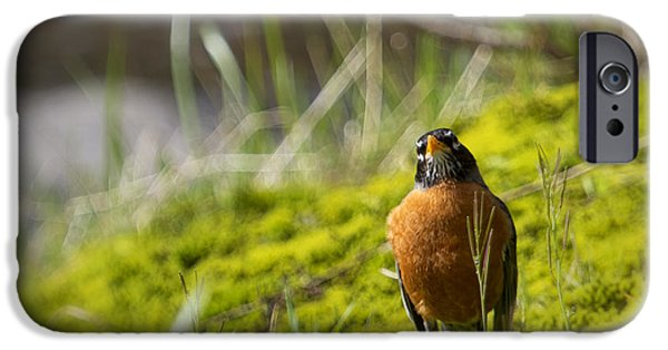 Fed iPhone Cases - Too Many Worms iPhone Case by Belinda Greb