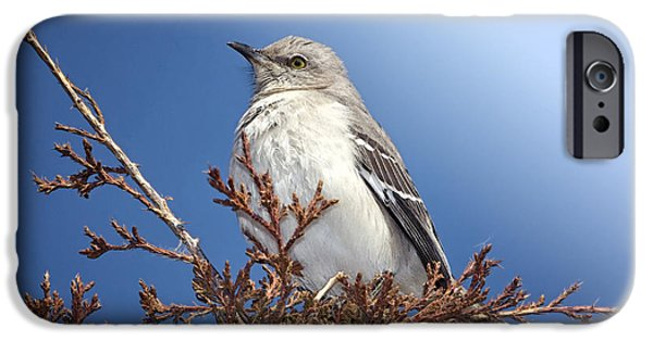 Mockingbird iPhone Cases - Top of My Game iPhone Case by Betty LaRue