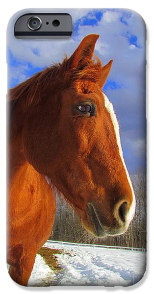 Equestrian Center iPhone Cases - Tori Girl iPhone Case by Elizabeth Dow