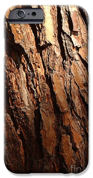 Pines iPhone Cases - Torrey Pine Bark iPhone Case by Anna Lisa Yoder