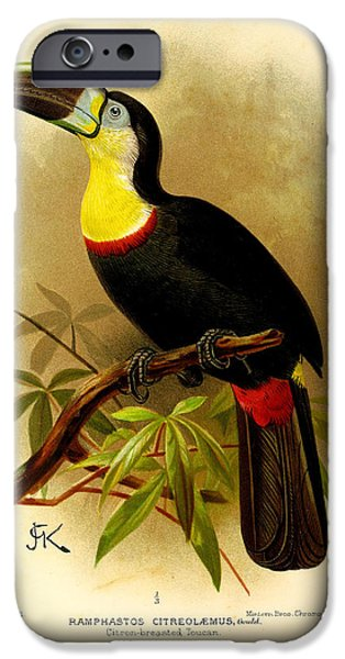 Toucan iPhone Cases - Toucan iPhone Case by J G Keulemans