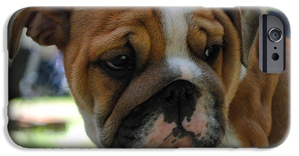 Dogs Pyrography iPhone Cases - Tough Being a bulldog iPhone Case by Ronald Nunes