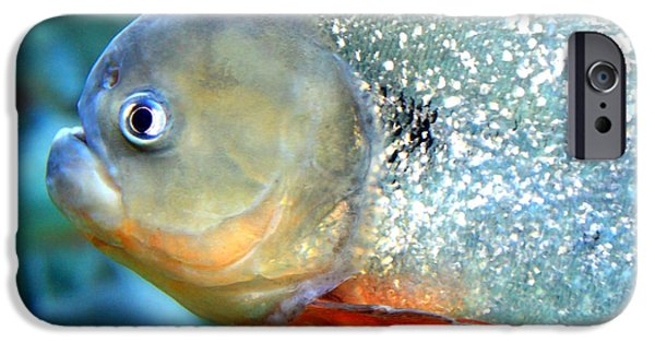 Piranha iPhone Cases - Tough Guy  iPhone Case by Carol Groenen