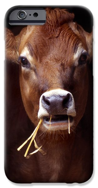 Animals Photos iPhone Cases - Toupee iPhone Case by Skip Willits