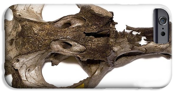 Nineteenth iPhone Cases - Toxodon Platensis Skull iPhone Case by Natural History Museum, London