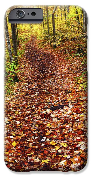 Autumn iPhone Cases - Trail in fall forest iPhone Case by Elena Elisseeva