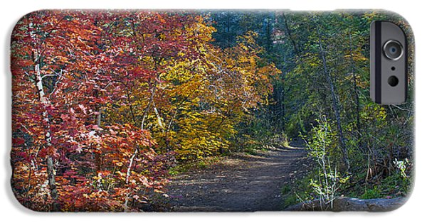 West Fork iPhone Cases - Trail of Maples iPhone Case by Brian Lambert