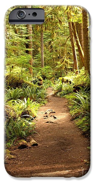 Walk Paths iPhone Cases - Trail through the Rainforest iPhone Case by Carol Groenen