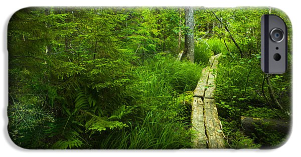 Green Path iPhone Cases - Trail Through the Woods iPhone Case by Diane Diederich