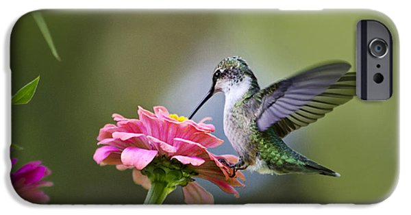 Hummingbird iPhone Cases - Tranquil Joy iPhone Case by Christina Rollo