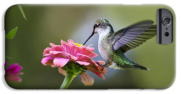 Animals Photographs iPhone Cases - Tranquil Joy iPhone Case by Christina Rollo