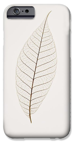 Transparent Leaf iPhone Case by Kelly Redinger