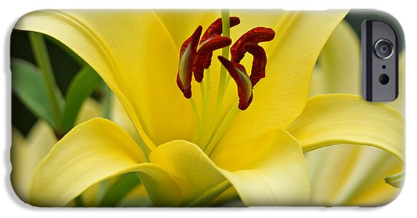 Indiana Art iPhone Cases - Trebbiano Lily iPhone Case by Sandy Keeton