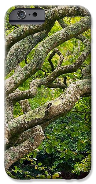 Tree #1 iPhone Case by Stuart Litoff