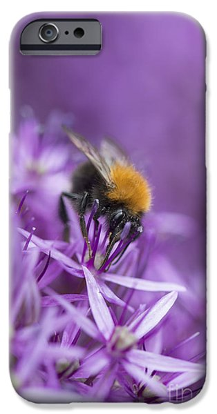 Pollinate iPhone Cases - The Tree Bumblebee iPhone Case by Tim Gainey